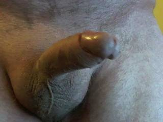 old cock